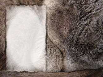 Chartreux Literature Template by FantasyStock