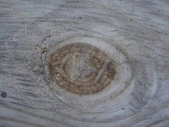 Wood Grain Texture 3 by FantasyStock