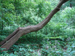 Stock Forest Background 1 by FantasyStock