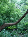 Stock Forest Background 2 by FantasyStock