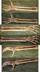 Skeletal Arm Bones + Hand by FantasyStock