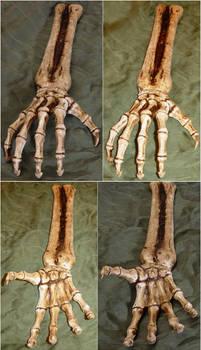 Skeletal Hand Bones + Arm by FantasyStock