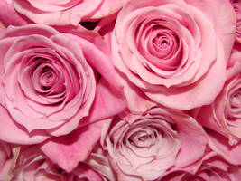 Pink Rose Boquet Close Up by FantasyStock