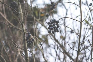 Polish Kashubian Villages December 2015 (1) by eyesofthenorth