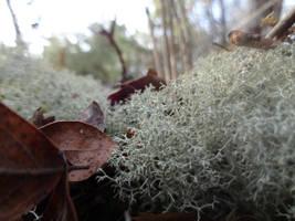 Plant Close-up by saveliseb