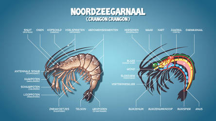 North Sea Shrimp by Popgrafix