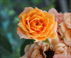 A floral greeting from my garden 2 by GLO-HE