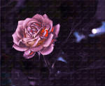 Rose Abstract by GLO-HE