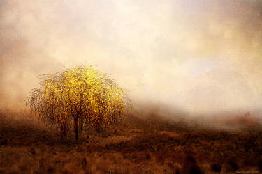 Golden Willow by JacqChristiaan