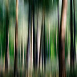 Forest Impression by JacqChristiaan