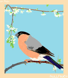 Bullfinch by PhliP
