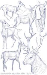 Study: Deer by CobraVenom