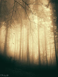 Magic Light by Weissglut