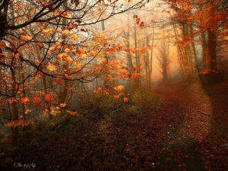 Fairy Wood VI by Weissglut