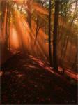 Warm Autumn Light by Weissglut