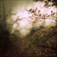 Fairy Wood VIII by Weissglut