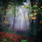Autumn Wood by Weissglut
