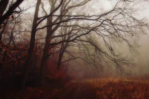 Dec. 31-2014 III by Weissglut
