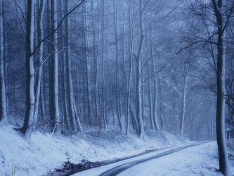 Snow Forest II by Weissglut