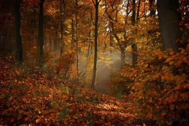 Golden October by Weissglut