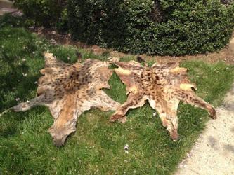 1 hyane 2 hyane by ShiranuiKurai