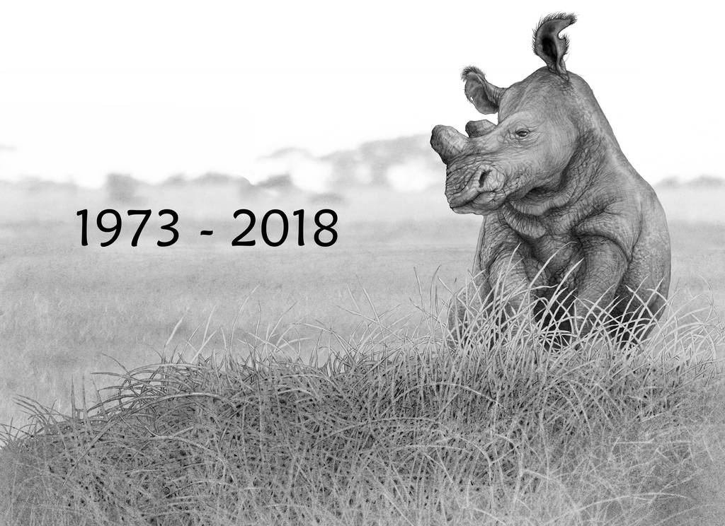 Sudan - last white rhino 1973 - 2018 by RodgerHodger