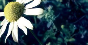 SummerLove by Supershaunii
