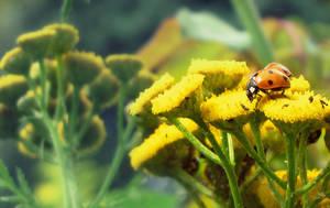 Ladybug by Supershaunii