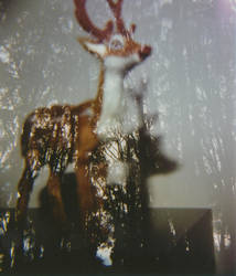 Forest Deer by Robbiefu