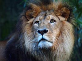 Lion Portrait by Squiddgee7734