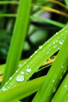 Little drops by fotografka