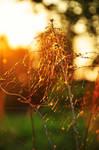 Sunny morning by fotografka