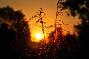 Sun in the center by fotografka