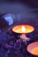Lilac light by fotografka