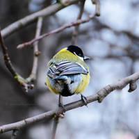 Blue feathers by fotografka