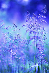 Blue nature by fotografka