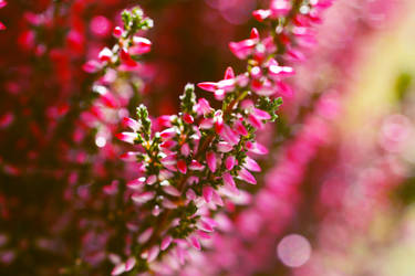 Purple by fotografka
