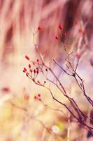 Briar by fotografka