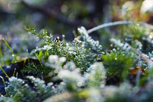 Frost bokeh by fotografka