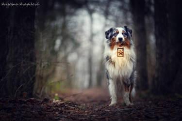 Alone in the forest by KristynaKvapilova