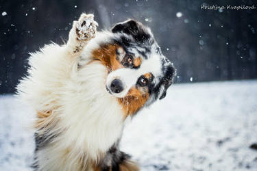 Hi snow! by KristynaKvapilova