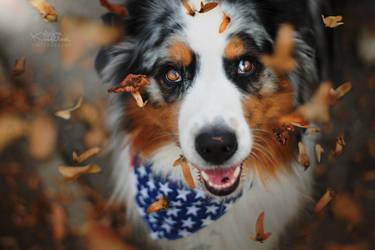 Autumn is here! by KristynaKvapilova