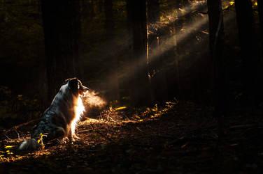 Into darkness by KristynaKvapilova