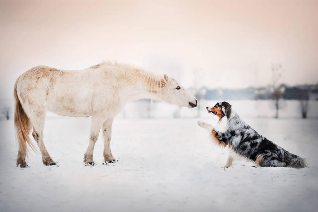 Friendship by KristynaKvapilova
