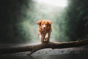 Jump! by KristynaKvapilova