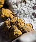 Lichens by silverboy65