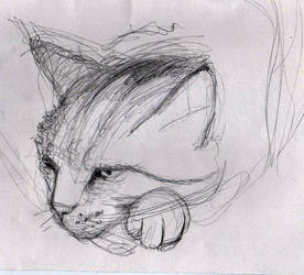 annoyed cat by Ewlor