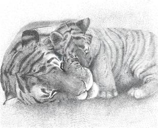 Predatori e cuccioli, Tigre by Ewlor