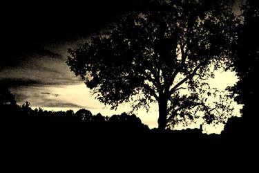 Tree by mw777