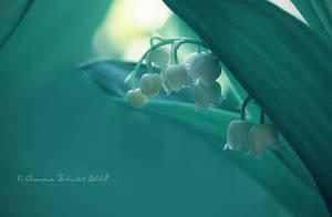 whiteness by tasiy